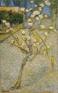 Vincent Van Gogh - Floraison Pear Tree