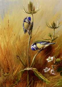 Archibald Thorburn - Mésanges On A Teasel