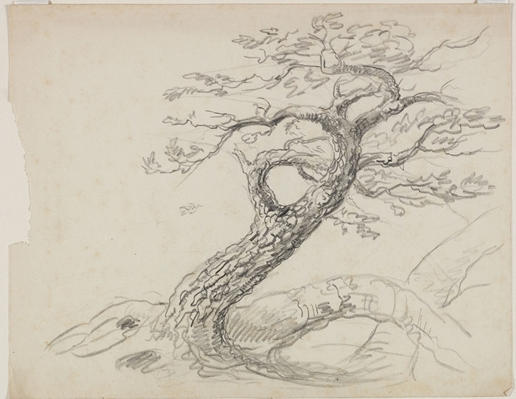 tree4, gravure de Thomas Cole (1801-1848, United Kingdom)