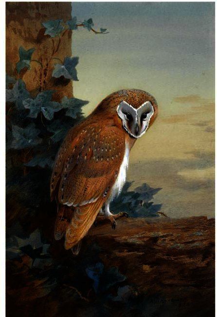 une baraque chouette, aquarelle de Archibald Thorburn (1860-1935, United Kingdom)