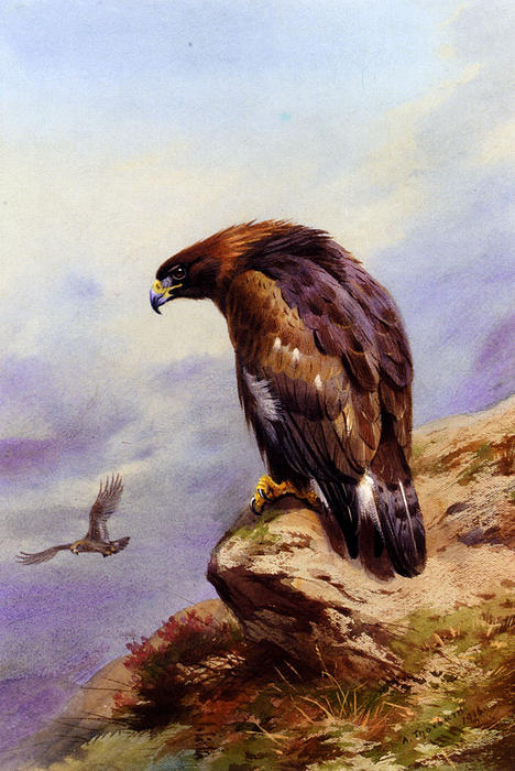 a doré aigle, aquarelle de Archibald Thorburn (1860-1935, United Kingdom)