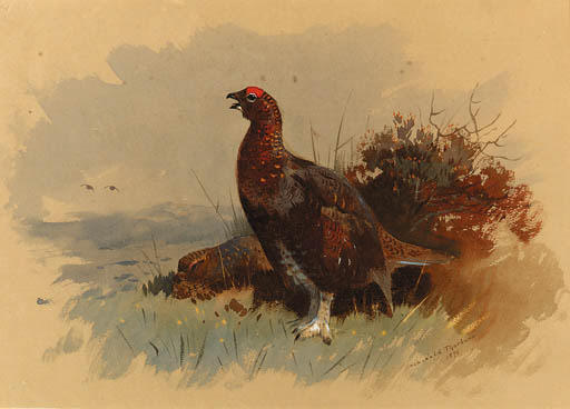 A Pair Of Red Grouse Parmi Heather, aquarelle de Archibald Thorburn (1860-1935, United Kingdom)