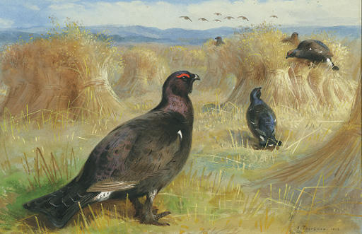 Parmi Blackcock Les Stookes maïs, aquarelle de Archibald Thorburn (1860-1935, United Kingdom)