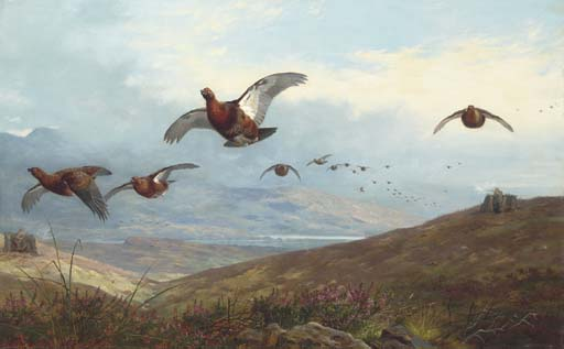 Grouse tournage, aquarelle de Archibald Thorburn (1860-1935, United Kingdom)