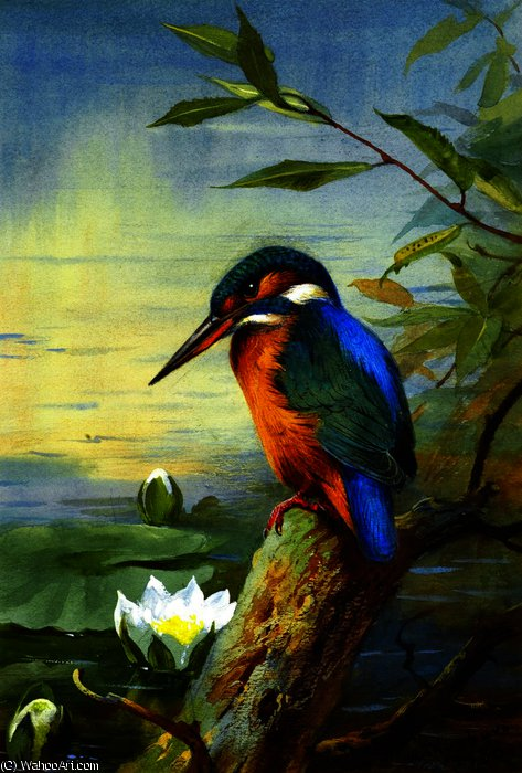 Kingfisher 1, aquarelle de Archibald Thorburn (1860-1935, United Kingdom)