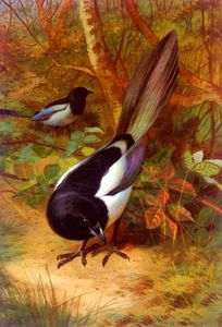 Archibald Thorburn - Magpies