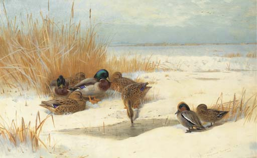 Mallard Et Teal dans la neige, aquarelle de Archibald Thorburn (1860-1935, United Kingdom)