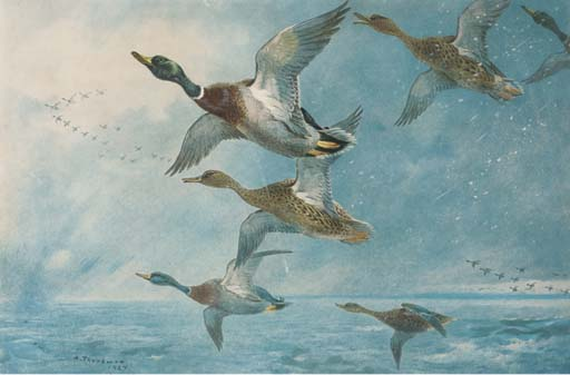 Colverts; Oies; Woodcock; Blackcock; Partridge; Et Lagopède, aquarelle de Archibald Thorburn (1860-1935, United Kingdom)