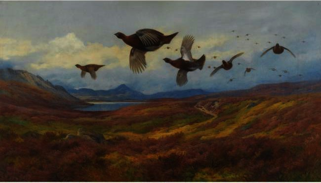 Embardée De La Guns-Rouge Grouse, aquarelle de Archibald Thorburn (1860-1935, United Kingdom)