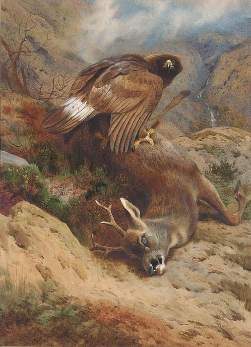 Le Roe Perdu, aquarelle de Archibald Thorburn (1860-1935, United Kingdom)