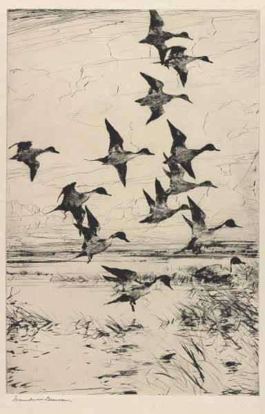 Pintails Passing, gravure de Frank Weston Benson (1862-1951, United States)