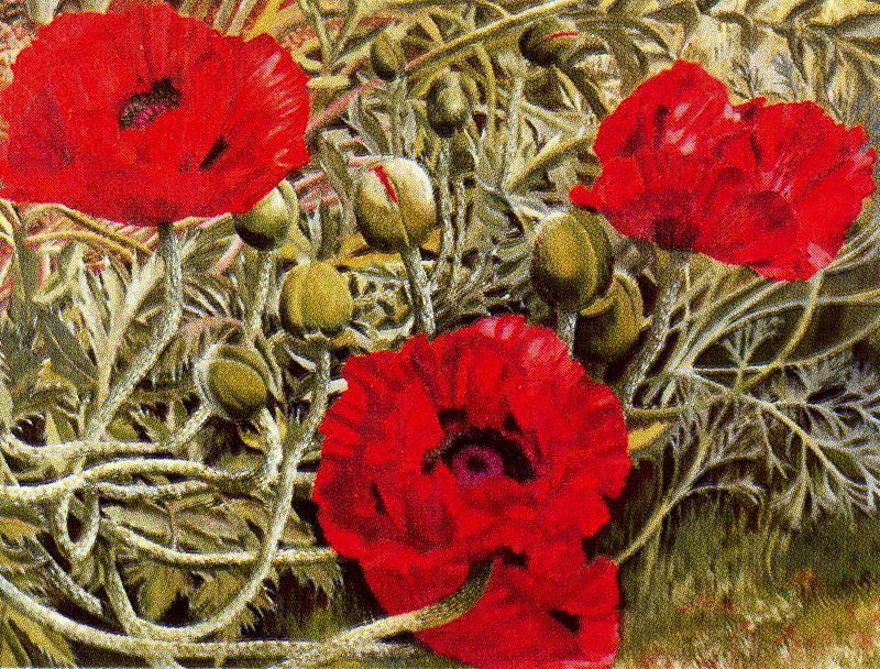 les coquelicots de Stanley Spencer (1891-1959, United Kingdom)