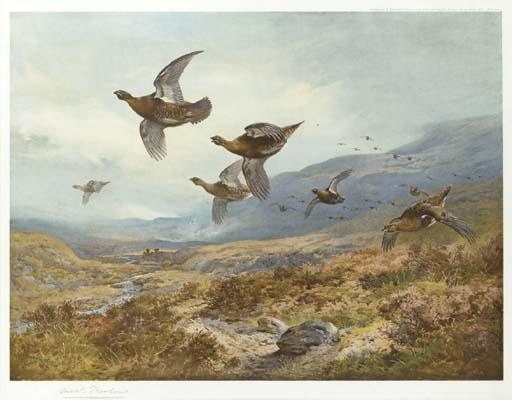 Tétras, aquarelle de Archibald Thorburn (1860-1935, United Kingdom)