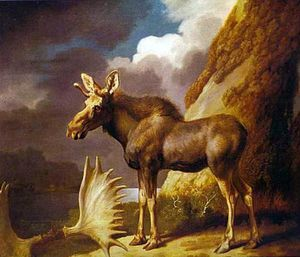 George Stubbs - Le Moose