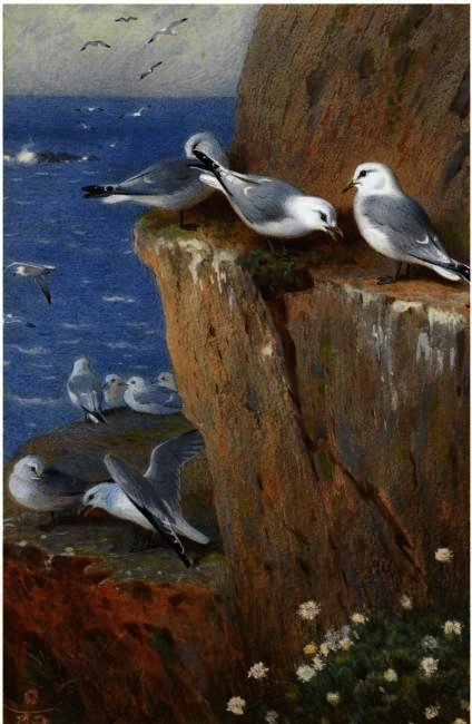 Seagulls, aquarelle de Archibald Thorburn (1860-1935, United Kingdom)