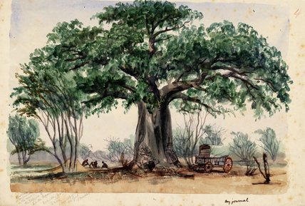 Roulotte And Men sous un grand Baobab de Thomas Baines (1820-1875, United Kingdom)