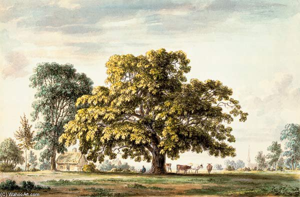 A Walnut Tree À Denton, Près Grantham Et de Anthony Devis (1729-1816, United Kingdom)