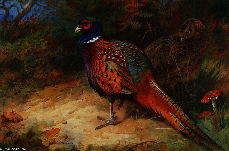 Hahn und Henne de Archibald Thorburn (1860-1935, United Kingdom)