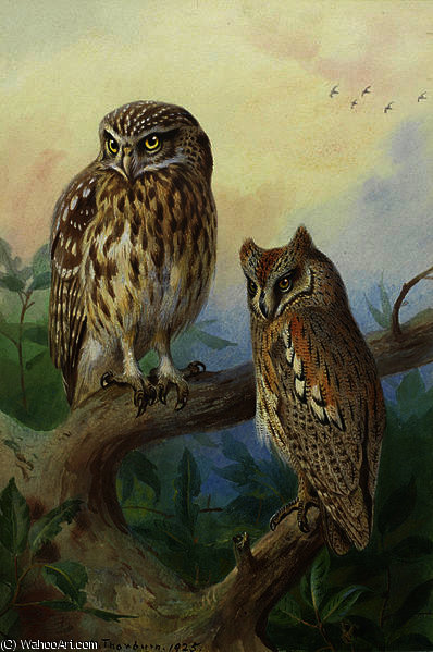 Peu Owl et Scops Hibou de Archibald Thorburn (1860-1935, United Kingdom)