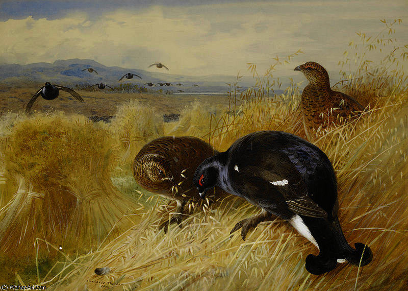 Sur les gerbes - Blackgame de Archibald Thorburn (1860-1935, United Kingdom)