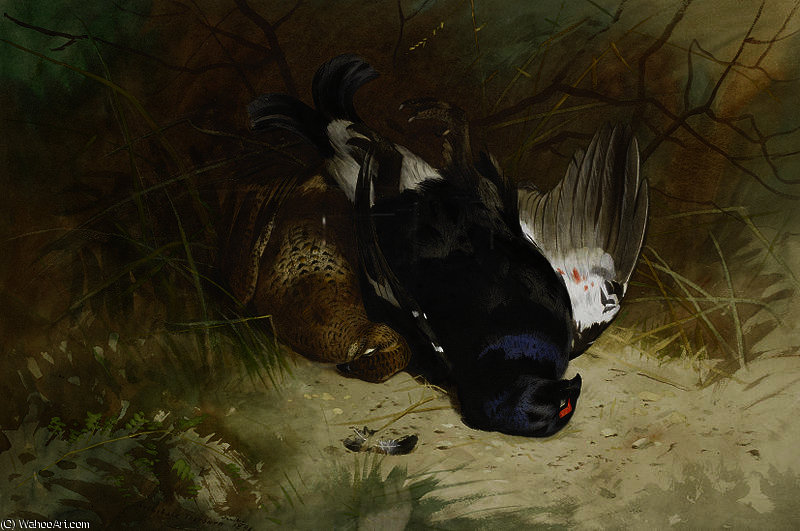 Nature morte de une paire de blackgame de Archibald Thorburn (1860-1935, United Kingdom)