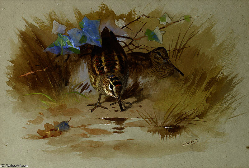 Woodcock dans un creux de sable de Archibald Thorburn (1860-1935, United Kingdom)