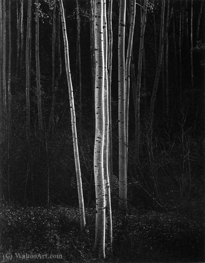 Untitled (362) de Ansel Adams (1902-1984, United States) | Reproductions D'art De Musée | ArtsDot.com