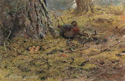 Un capercailie poule avec son nid de George Edward Lodge (1860-1954, United Kingdom)